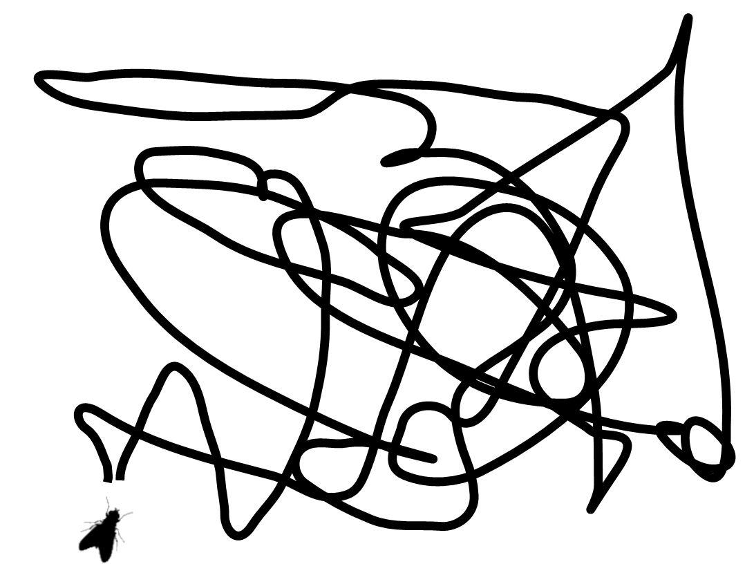 flugkarte für stubenfliegen_route 1